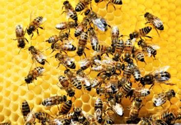 Τσίμπημα από μέλισσα ή σφήκα. Πόσο επικίνδυνο; Ξεφορτωθείτε τις φωλιές τους!