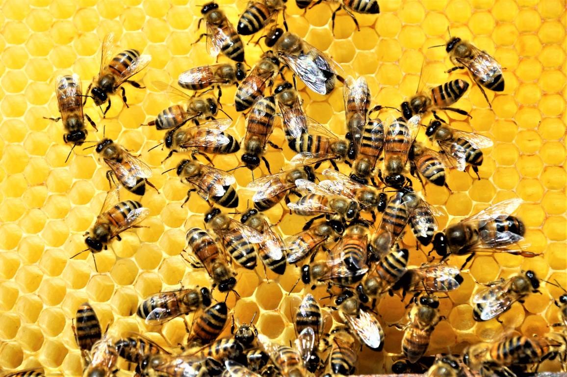 Τι συμβαίνει όταν σας τσιμπάει μια μέλισσα ή μια σφήκα. Κίνδυνοι & Συμπτώματα.