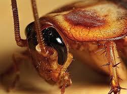 Τα 5 πιο συχνά σημεία στο σπίτι σας που κρύβονται οι κατσαρίδες