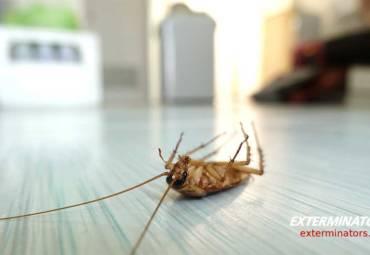 Προβλήματα με κατσαρίδες; Τα 5 πιο συχνά σημεία στο σπίτι σας που κρύβονται οι κατσαρίδες & πως να τις εξολοθρεύσετε!