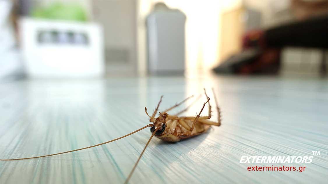 Προβλήματα με κατσαρίδες; Μάθε πως να τις εξολοθρεύσετε!