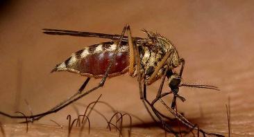 4 Συμβουλές που θα σας βοηθήσουν να προετοιμαστείτε για την εποχή των κουνουπιών!