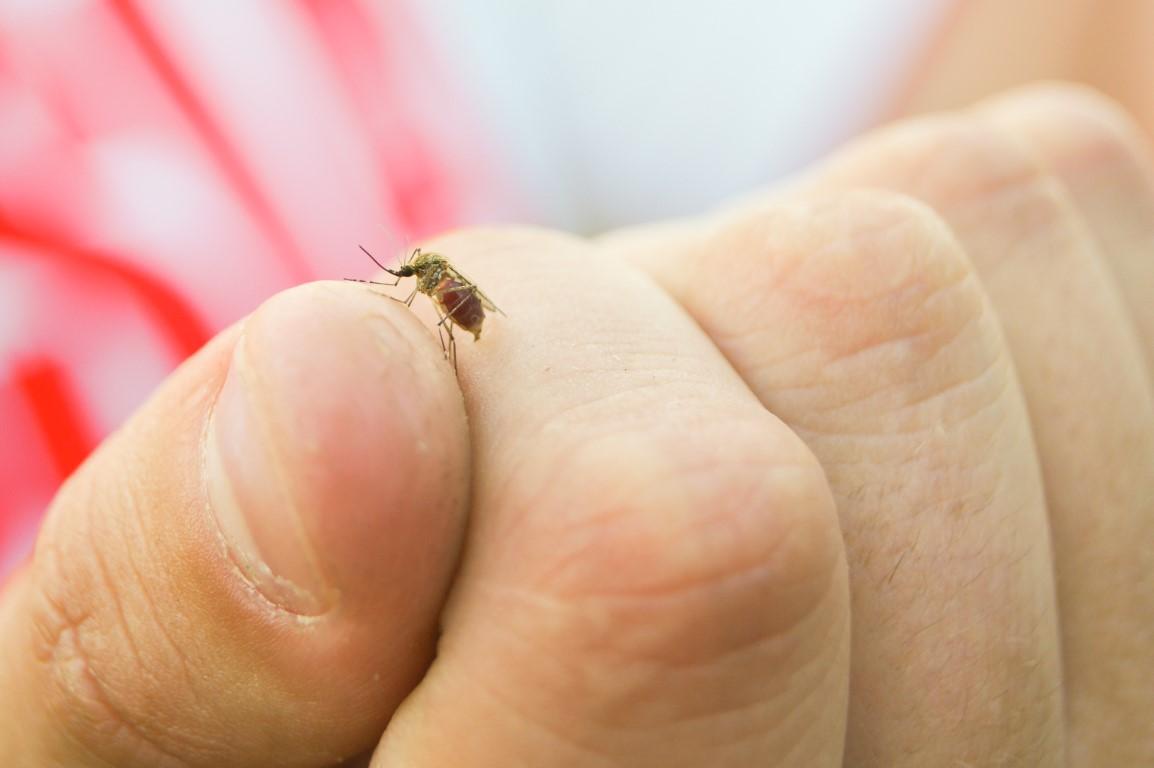 Κουνούπια, κοριοί, ψύλλοι, τσιμπούρια και ακάρεα.
